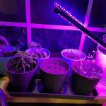 grow-light